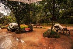 Parkowy Samochodowy Kareciany koń w kałuży po ulewnego deszczu w zwrotnikach Obrazy Royalty Free