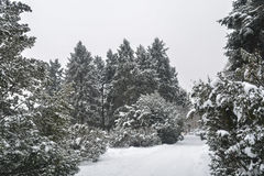 Parkowy snowbound Obraz Stock