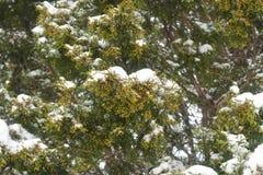 Parkowy snowbound Fotografia Royalty Free