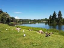 Parkowy staw Zdjęcie Royalty Free