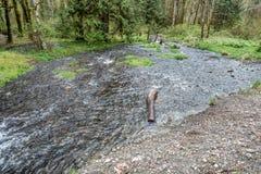 Parkowy strumień obrazy royalty free