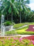 parkowy tropikalny projekta wysoki ilustraci krajobrazu planu fabuły postanowienie Zdjęcia Royalty Free