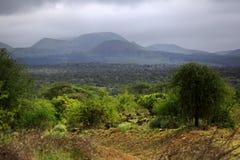 Parkowy Tsavo wschodu obywatel zdjęcie royalty free