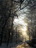 Parkowy widok Zdjęcia Royalty Free