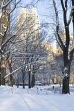 Parkowy zima Widok fotografia royalty free