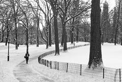 Parkowy zima Widok zdjęcie royalty free