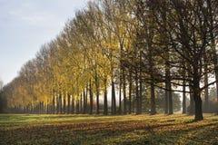 Parkrij van bomen Royalty-vrije Stock Fotografie