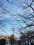 Parks in the autumn There is a tree without leaves. And can see the Tokyo Sky Tree Building In japan stock photos