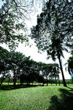 Parks in Bangkok. Royalty Free Stock Photo