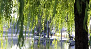 Parks of Beijing. Park near Olimpic Stadium. China. Parks of Beijing. Park near Olimpic Stadium. The coolness of the water on a hot day Stock Photography