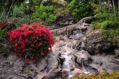 Parks and gardens on the Canary Islands. Parks and gardens with lush vegetation and a waterfall. An idea for arranging a garden stock photos