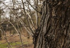 Parks of London - branches in winter, a tree trunk. This image shows a view of medley of branches and a tree trunk in one of the parks in London. It was taken Royalty Free Stock Photography
