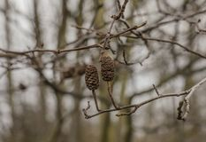 Parks of London, England - branches on a gloomy day. This image shows a view of medley of branches against a gloomy sky in one of the parks in London. It was Stock Images