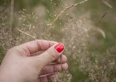 Parks in London, England - grass full of seeds. This image shows a view of a park in London, England, the UK. It was taken on a sunny day in summer 2018. We can royalty free stock photography