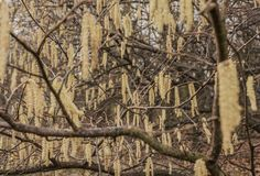 Parks of London - trees in winter. This image shows a view of one of the parks in London Stock Photos