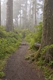 Parks and nature on the Oregon coast. Royalty Free Stock Image
