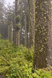 Parks and nature on the Oregon coast. Stock Photography