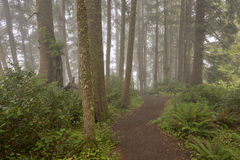 Parks and nature on the Oregon coast. Stock Images
