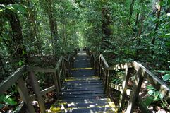 Parks with staircase. Trees and wooden path in the parks royalty free stock photo