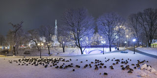 Parks in the winter night. Riga Stock Photography