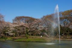 parkshinjukutokyo yoyogi Royaltyfri Fotografi