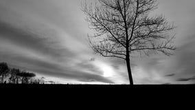 parksilverthorn Arkivfoto