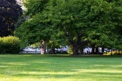 parksommar Royaltyfri Fotografi