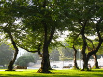 parksommar Arkivbilder