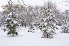 Parkstraße bedeckt in den starken Schneefällen Stockbilder