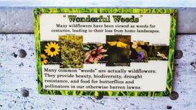 Parkteken van de Kikkerfruit van Florida Wildflowers, Algemene Bloem, Tickweed, Dagbloem, Spaanse Naald stock afbeelding