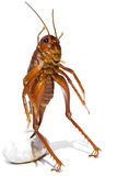 The Parktown Prawn Stock Photos