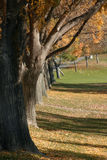 parktree royaltyfri bild