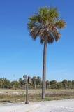 Parkuhr nahe bei einer Palme Stockfotos