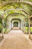Parkway in Rio de Janeiro Botanical Garden, Brazil. Royalty Free Stock Images