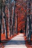 Parkway z drzewami przy stroną obrazy royalty free