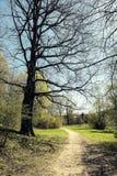 Parkweg royalty-vrije stock foto's