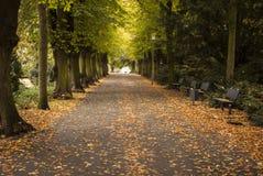 Parkweg Stockbilder