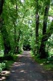 Parkweg door oude bomen wordt omringd die Stock Fotografie