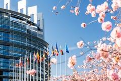 Parlamento Europeu da árvore de sakura da árvore da flor de cerejeira Imagem de Stock