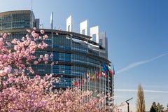 Parlamento Europeu do treee de sakura da árvore da flor de cerejeira Foto de Stock