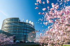 Parlamento Europeu do treee de sakura da árvore da flor de cerejeira Fotos de Stock Royalty Free