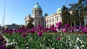 Parlamento serbo Fotografie Stock Libere da Diritti
