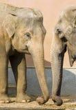 Parler d'éléphants Photo libre de droits