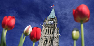 Parliament of Canada in Spring royalty free stock photography