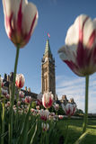 Parliament Hill of Ottawa, Canada. In a sunny spring afternoon with red-and-white tulips in the foreground Stock Photography