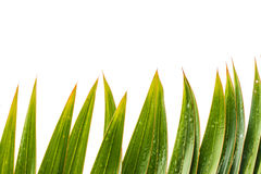 Parm green leaf isolate white background.  Stock Photo
