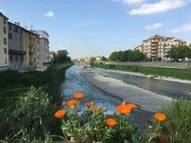 Parma fotos de stock royalty free