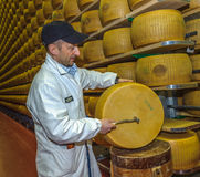 PARMA, ITALY - March, 10, 2014: Parmesan cheese quality test Stock Photography
