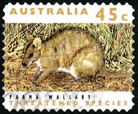 Parma Wallaby Australian Postage Stamp Royalty Free Stock Photo