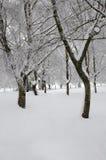 Parmi des arbres avec la neige Image stock
